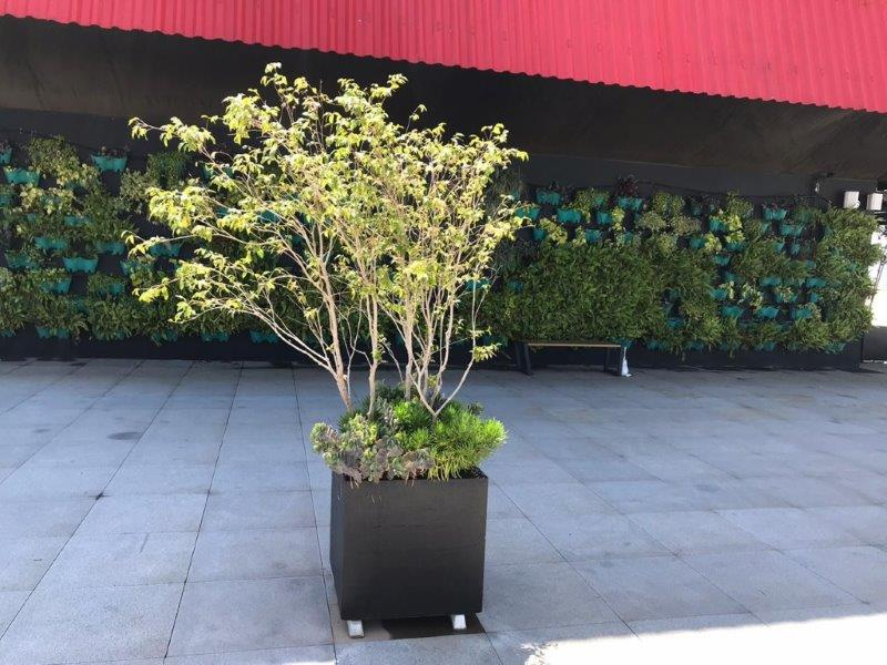Projeto de jardins verticais