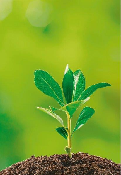planta-brotando
