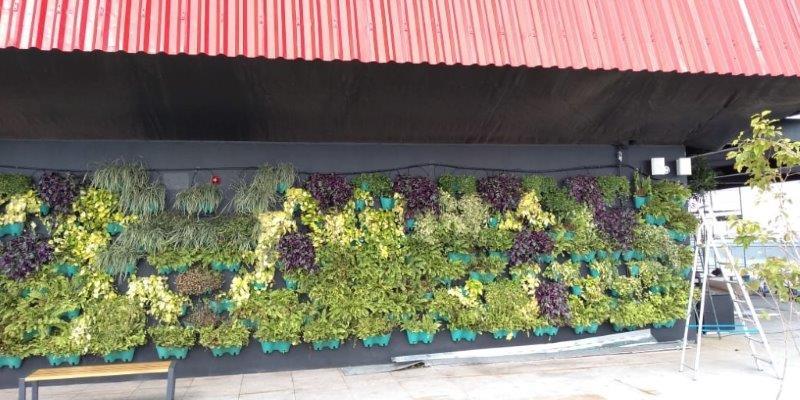 Empresa que faz jardim vertical