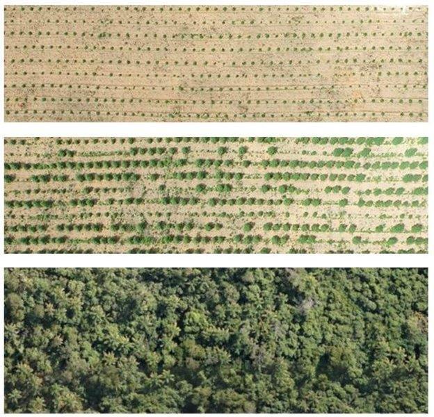 Empresa de reflorestamento ambiental