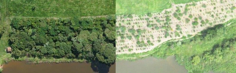 Empresa de reflorestamento