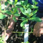 Laudo de caracterização da vegetação