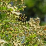 Levantamento de fauna e flora